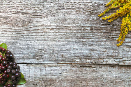 Yellow flower and chokeberry on old wooden background