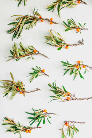 Pattern from fresh sea buckthorn branches isolated on white background.