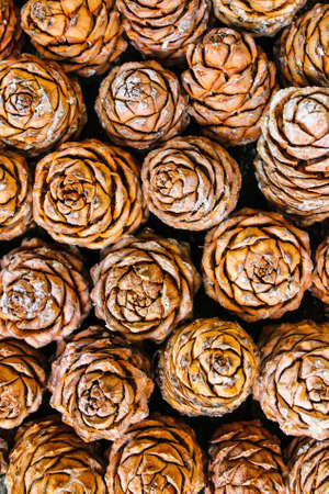 Background of brown cedar cones with resin 写真素材 - 129457489