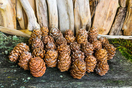 Brown cedar cones on a wooden background