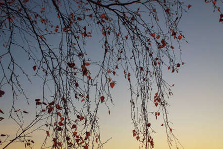 Yellow leafed plants on river backdrop in sunset. Fall nature