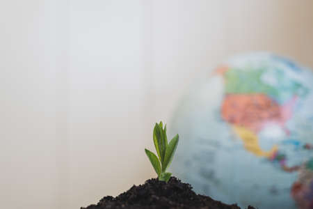 New concept of life and renewal. Small green sprout on a background of the globe