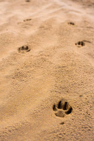 Dog footprints on a wet sandy beach with copy space for text 스톡 콘텐츠