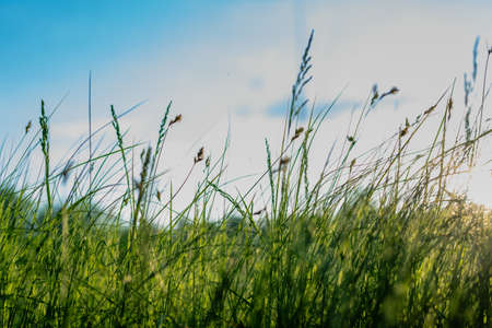 Blurred background of green grass against a blue sky.