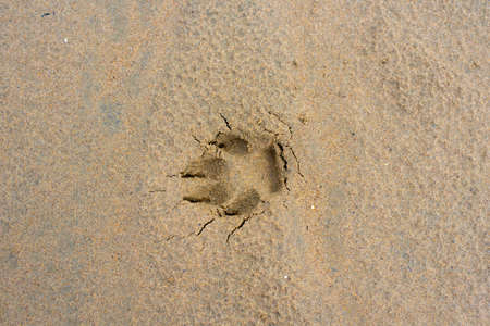 Dog footprints on a wet sandy beach with copy space for text.