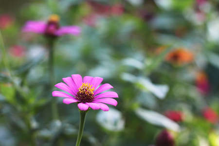 flower bed: colorful flowers in a flower bed Stock Photo