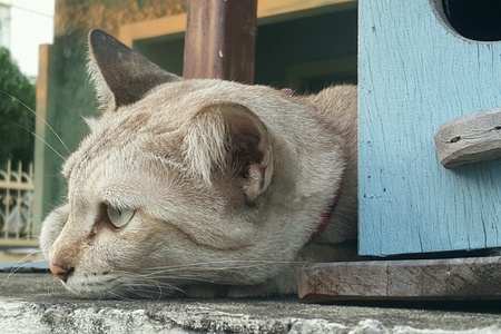 nose: Brown cat lying on house fence
