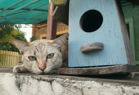 nose: Brown cat lying on house fence,  staring