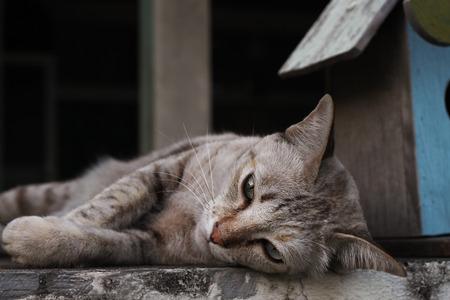on ear: mentir gato marr�n mascota en la parte superior de la pared Foto de archivo