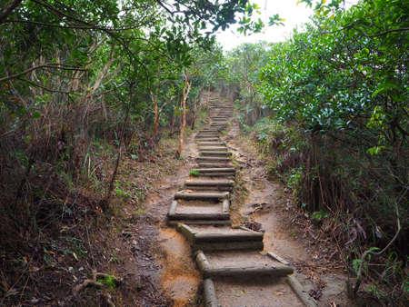 boardwalk trail: Forest Trail in Hong Kong