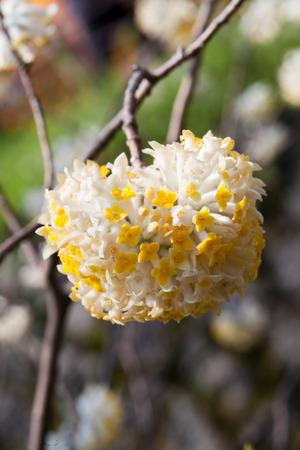 yellow flower amazing