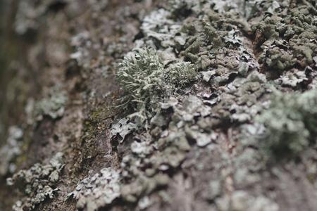 lichen on tree trunk Stok Fotoğraf