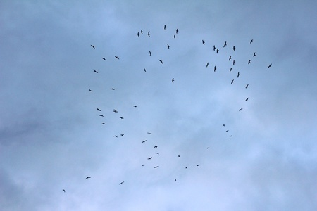 freiburg: Flock of seagulls on a cloudy sky, forming the shape of a heart