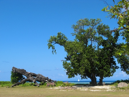View over a meadow between tree trunks onto the turquoise waters of the Indian Ocean on Praslin island, Seychelles photo