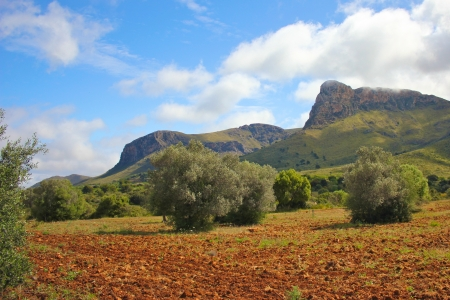 Red soil field with olive trees under a bright summer sky and mountains on Majorca island, Spain Stock Photo