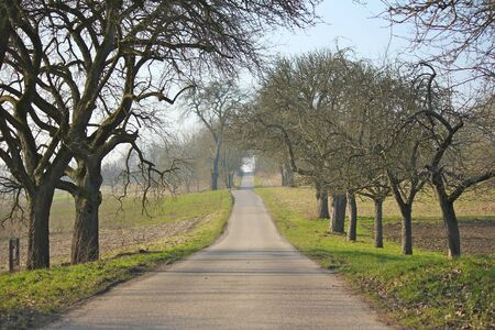 Lonely road with leafless fruit trees in autumn photo