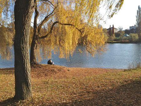Couple sitting on a lake in the bright autumn sun with a tree in the foreground