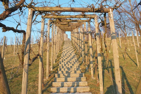 Stone staircase under grapevines leading up to the tower hill of Freiburg Seepark, Germany