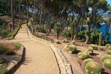View on the beautiful cactus gardens of Palafrugell Botanical Garden with the blue Mediterranean sea behind some tress