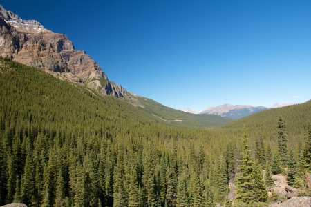 Endless forest stretching towards the Rocky Mountains in Alberta, Canada