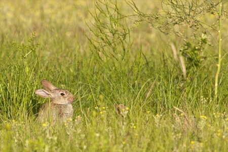 Cute bunny sitting in the green grass around Easter photo