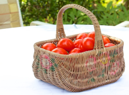 Old wooden basket full of wonderful tomatoes on a garden chair in the green photo
