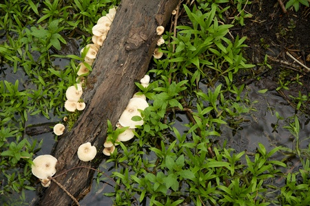 Dead branch in a swamp with mushrooms growing on it photo