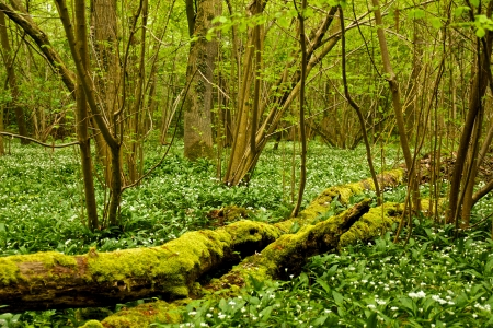 brushwood: Dead and cut-off branches in the green undergrowth of a bog