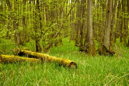 Dead and cut-off tree trunks in the green grass of a bog