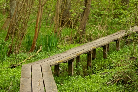 brushwood: Wooden walkway through a swamp with trees and undergrowth along the way