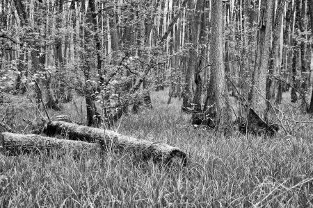 brushwood: Dead and cut-off tree trunks in the green grass of a bog - monochromatic version Stock Photo
