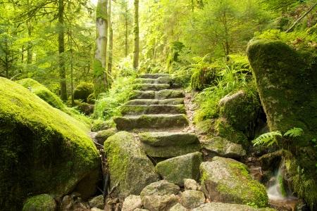 Scala in pietra che conduce lungo un percorso pedonale attraverso la Foresta Nera, Germania Archivio Fotografico - 20299297