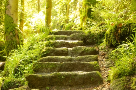 Stone staircase leading up a walkway through the Black Forest, Germany