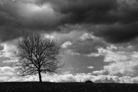 Lonely tree on a field in front of a vineyard with a stormy sky photo