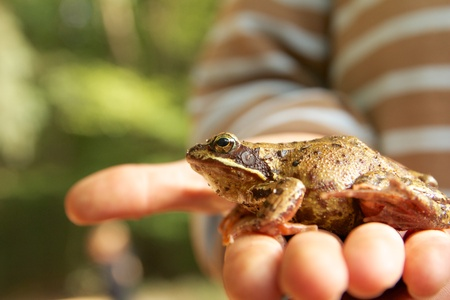 Young boy proudly presenting his latest catch - a beautiful common frog - on his hands Stock Photo