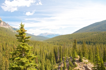 View on the mountains and lush forests around Moraine Lake, Alberta, Canada