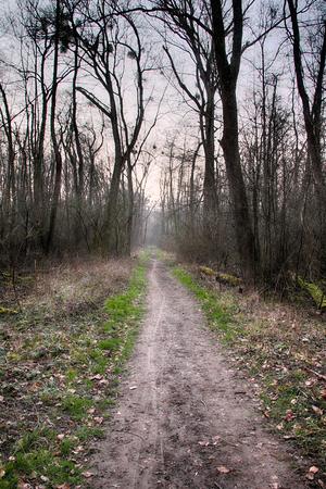 brushwood: pathway through the forest around the Weingartener Moor, Germany Stock Photo