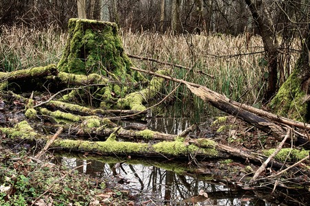 brushwood: Moody HDR image of a rotten tree trunk in the Weingartener Moor, a famous nature preserve bog near Karlsruhe, Germany Stock Photo