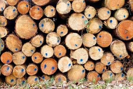 Stack of Black Forest timber, marked with a blue dot photo