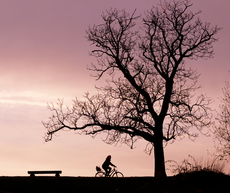 Silhouettes of a bench, a tree and a cyclist in the evening light