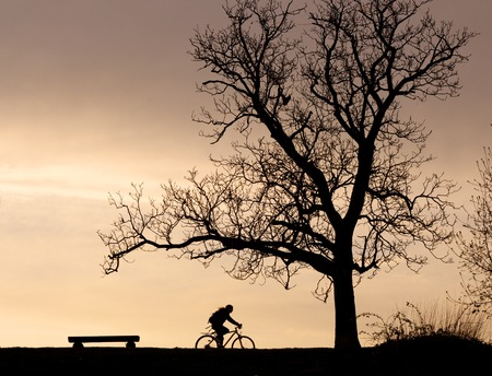 Silhouettes of a tree, a bench and a cyclist against a colorful evening sky photo