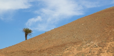 volcano slope: Single palm on the barren slope of a volcano on Lanzarote island, Spain Stock Photo