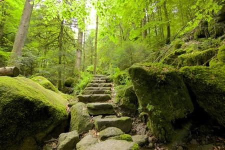 Antica Foresta Nera sentiero tra i boschi di Gertelbachtal, Germania Archivio Fotografico - 28341556