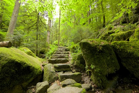Ancient Black Forest hiking trail through the woods of Gertelbachtal, Germany