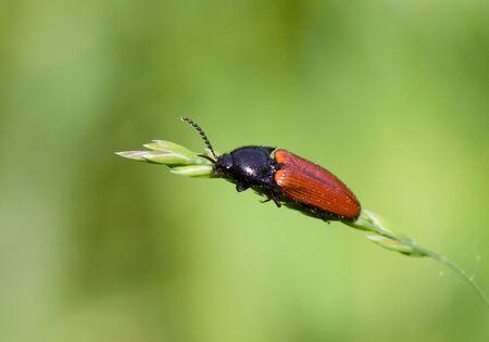 Cute bug sitting on a straw photo