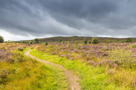 winding up: Path winding up a hill with purple heath in the Highlands, Scotland