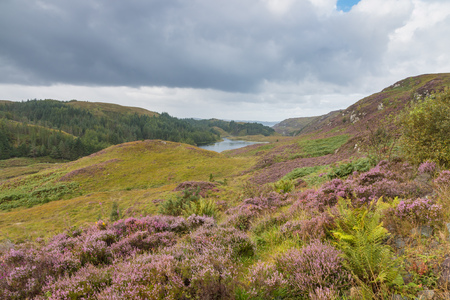 erica: View into the Highlands and over a small Loch in Scotland Stock Photo