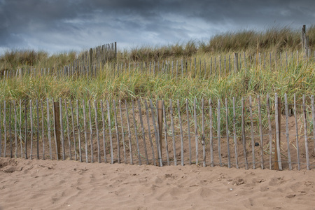 Dunes and beach grass behind a wooden fence to protect the beach of St Andrews, Scotland, from erosion