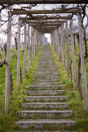 Stone staircase leading up a vineyard on a hill