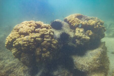 Underwater coral seascape in the tropical waters of Mauritizs, Indian Ocean